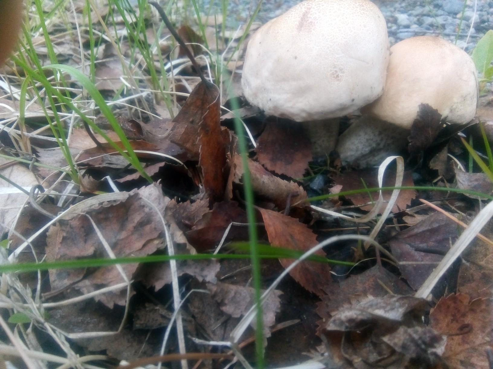грибы в мурманской области картинки гимнастов хорошо развиты